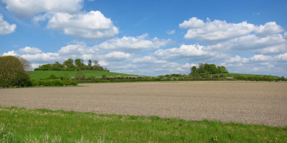 Wittenham Clumps, Oxfordshire - Robin Stevens CC BY-NC-ND 2.0