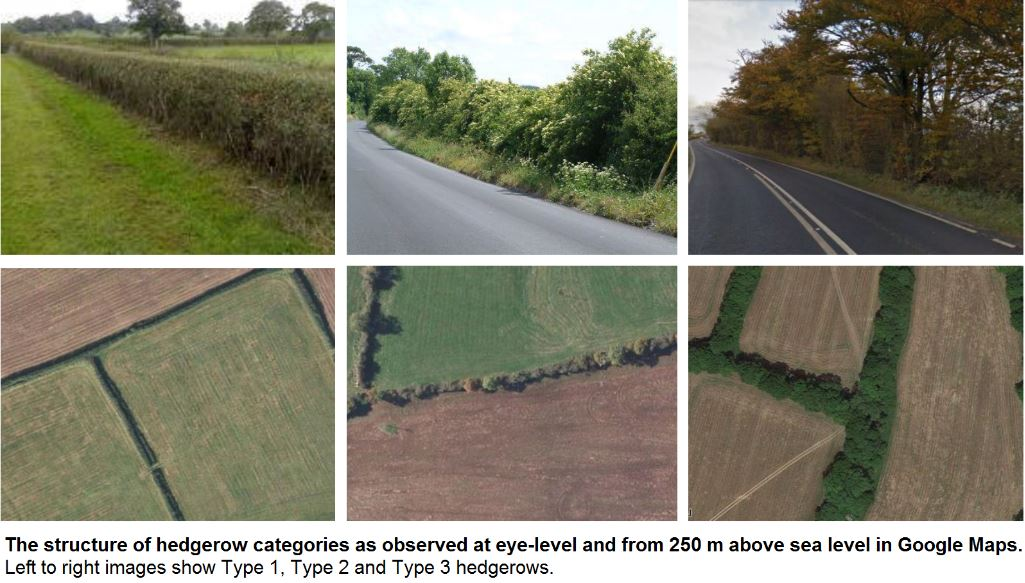 Hedgerows at the landscape scale | ialeUK - International