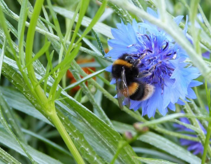 Research on the value of plants to pollinators has increased in recent years. Credit: Author