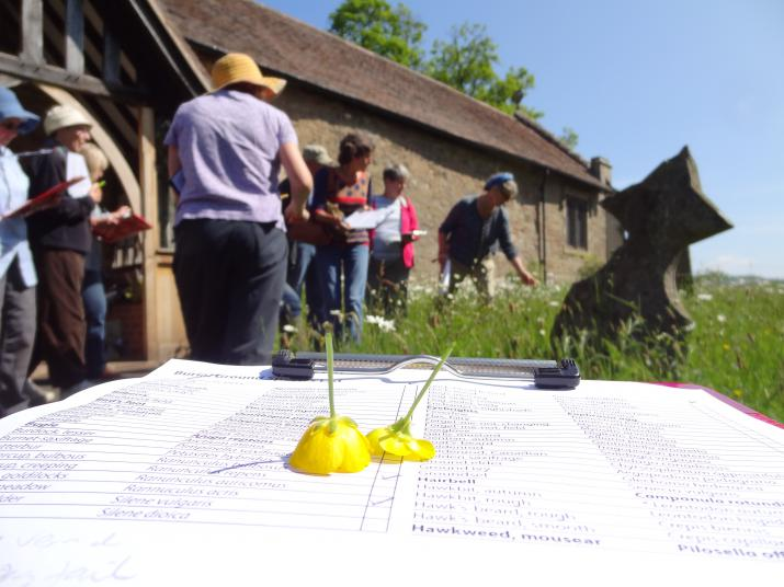 Grassland survey at St Mary's churchyard, Whitton, Shropshire  (Credit: Author)