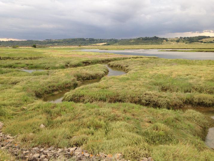 A salt-marsh landscape along the Thames Estuary in Essex (credit: Rosie Whicheloe)