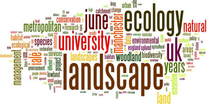 a wordle of the article (Credit: Author)