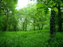 Littleheath Woods (c) Mathew Frith