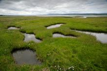 Saltmarsh at Nigg Bay Credit: Andy Hay (rspb-images.com)