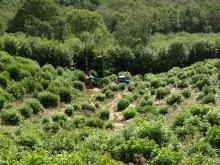 A hazel coppice woodland, Credit: author