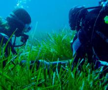 Surveying seagrass meadows, Mallorca (credit: Inés Mazarrasa)