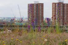 London green infrastructure. Dusty Gedge