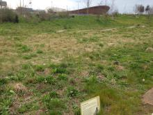 brownfield land, mountain bike trail, Olympic Park