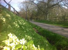 A primrose bank, surrey, credit author